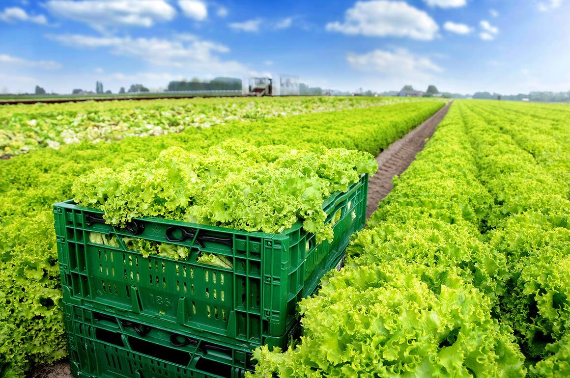 green-folding-tray-in-field