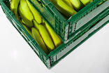 Green trays bananas